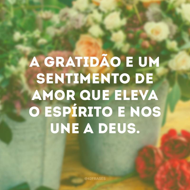 A gratidão e um sentimento de amor que eleva o espírito e nos une a Deus.