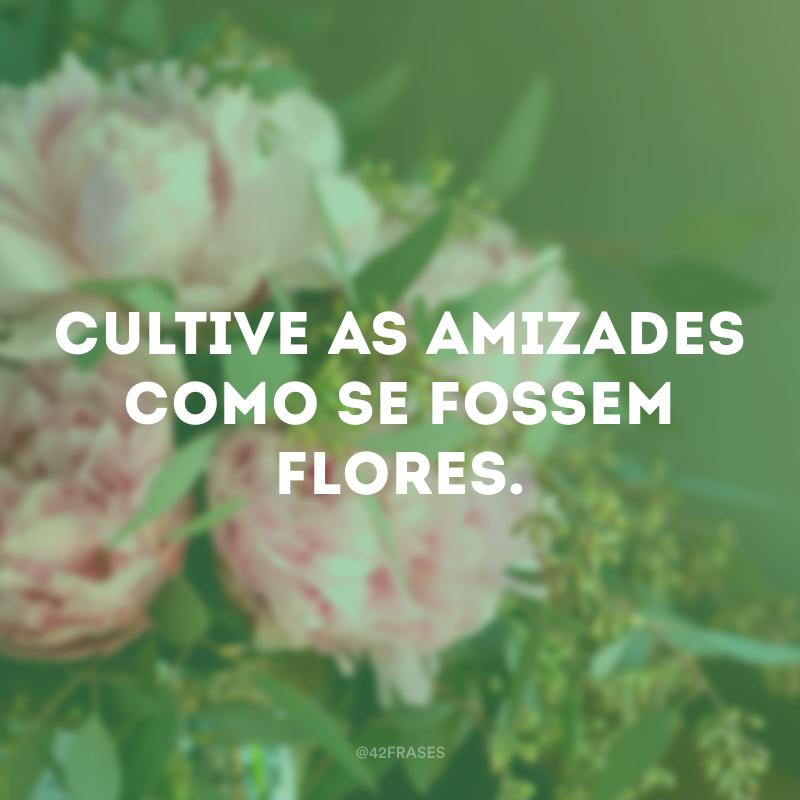 Cultive as amizades como se fossem flores.