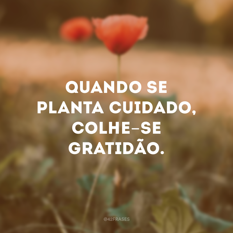 Quando se planta cuidado, colhe-se gratidão.