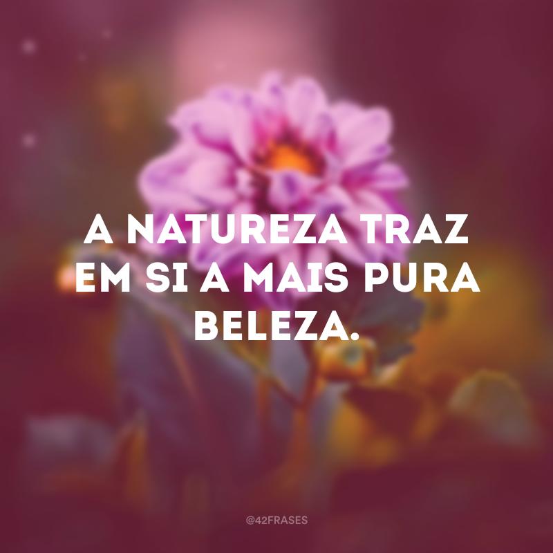 A natureza traz em si a mais pura beleza.