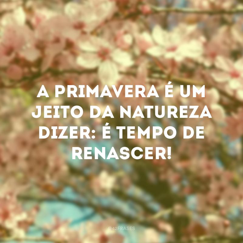 A primavera é um jeito da natureza dizer: é tempo de renascer!