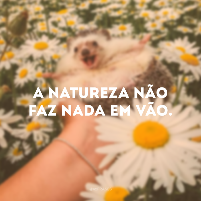 A natureza não faz nada em vão.