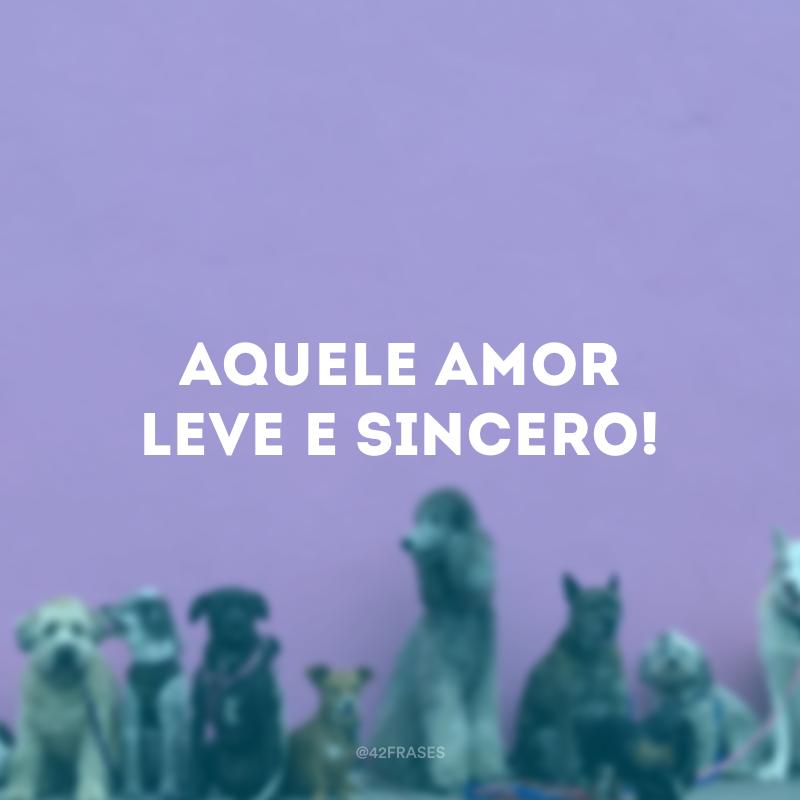 60 Legendas Para Foto Com Cachorro Para Demonstrar Seu Amor