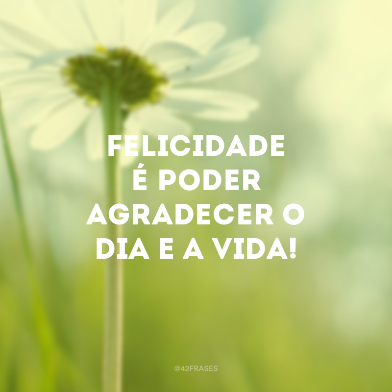 Felicidade é poder agradecer o dia e a vida!