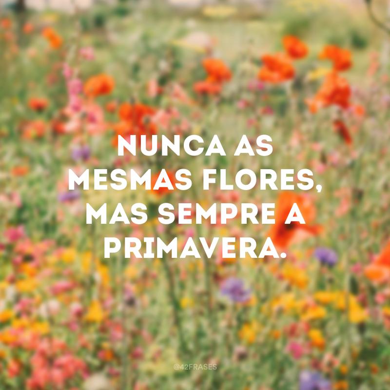 Nunca as mesmas flores, mas sempre a primavera.
