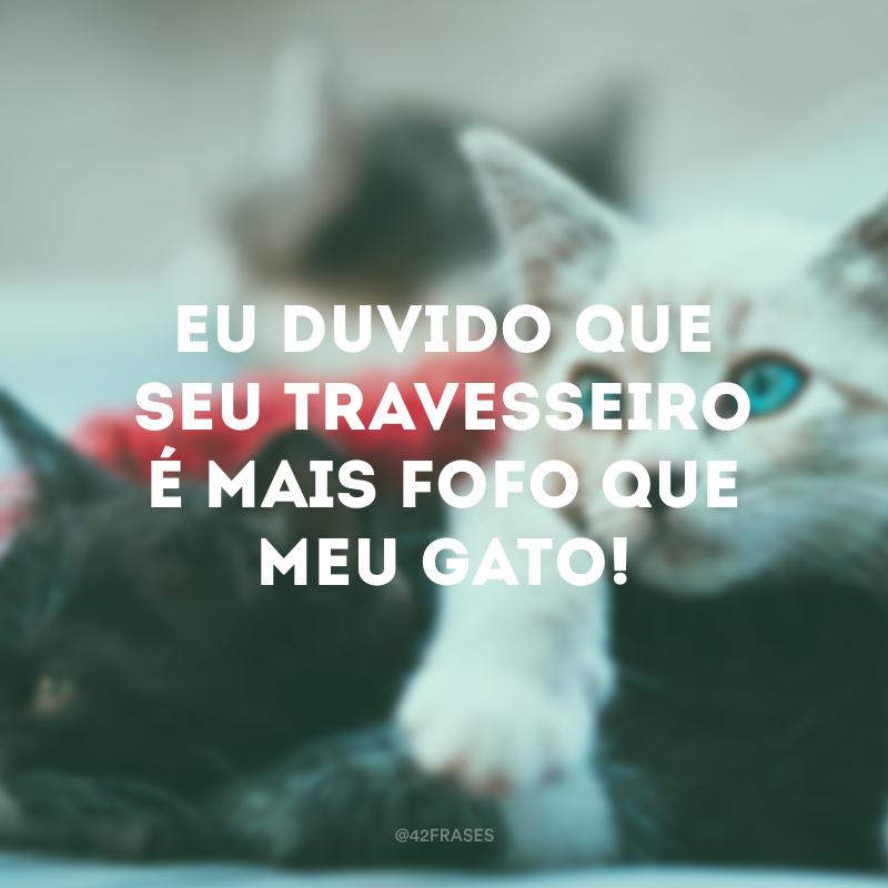 47 Frases De Gatos Para Demonstrar Carinho Ao Seu Bichano