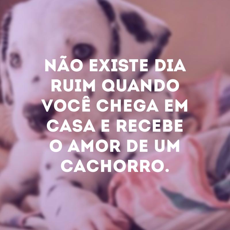 50 Frases De Cachorro Para Você Demonstrar O Seu Amor Pelos Animais