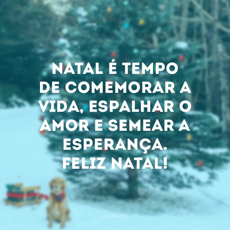 50 Frases De Feliz Natal Para Desejar A Todos Uma Vida Plena E Muito