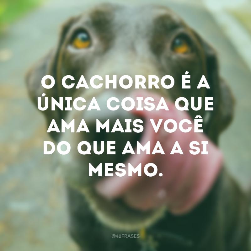 50 Frases De Cachorro Para Você Demonstrar O Seu Amor Pelos