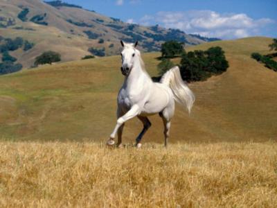 40 frases de cavalo para demonstrar todo seu amor por este animal
