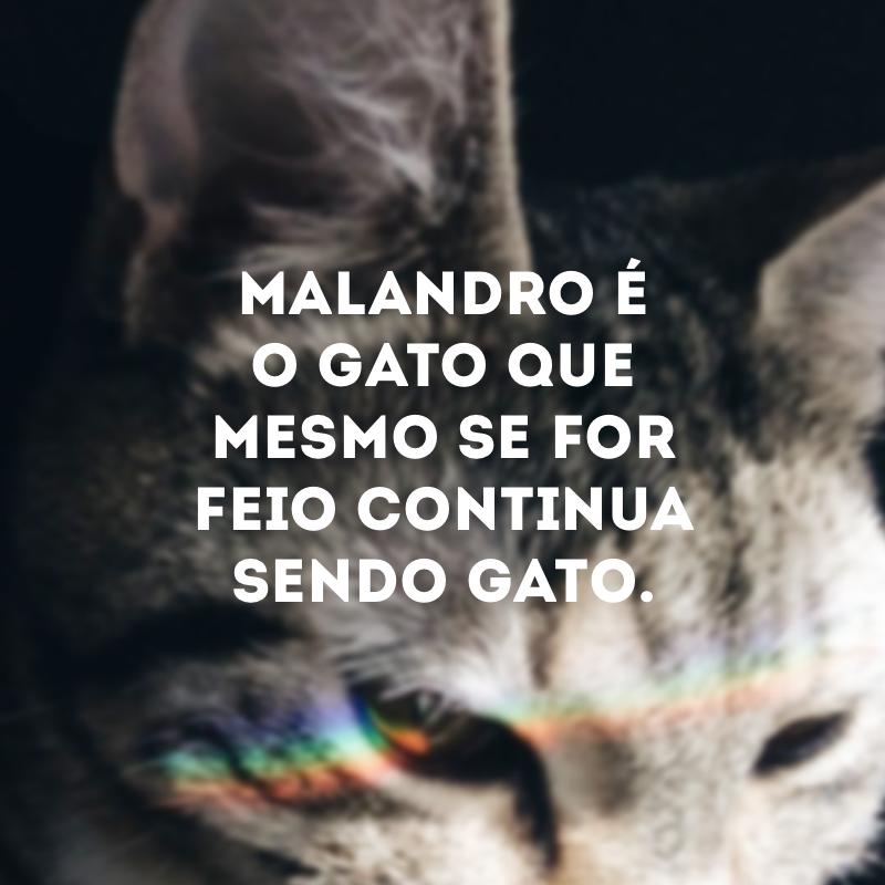 Malandro é o gato que mora no seu telhado e não paga aluguel.