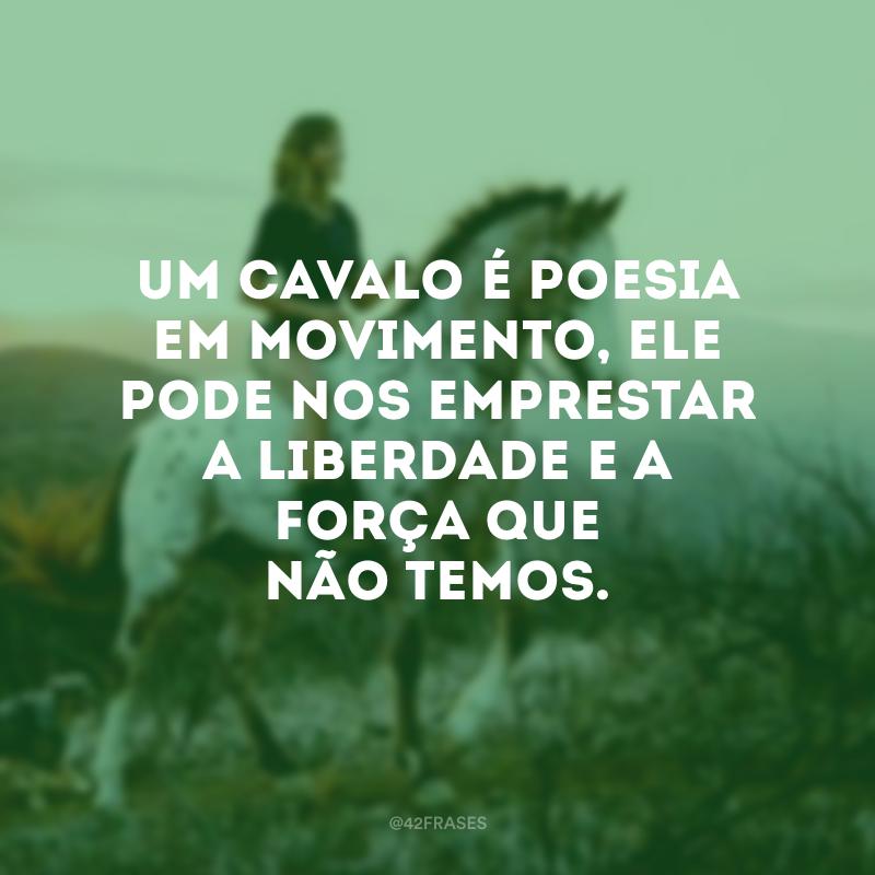 40 Frases De Cavalo Para Demonstrar Todo Seu Amor Por Este