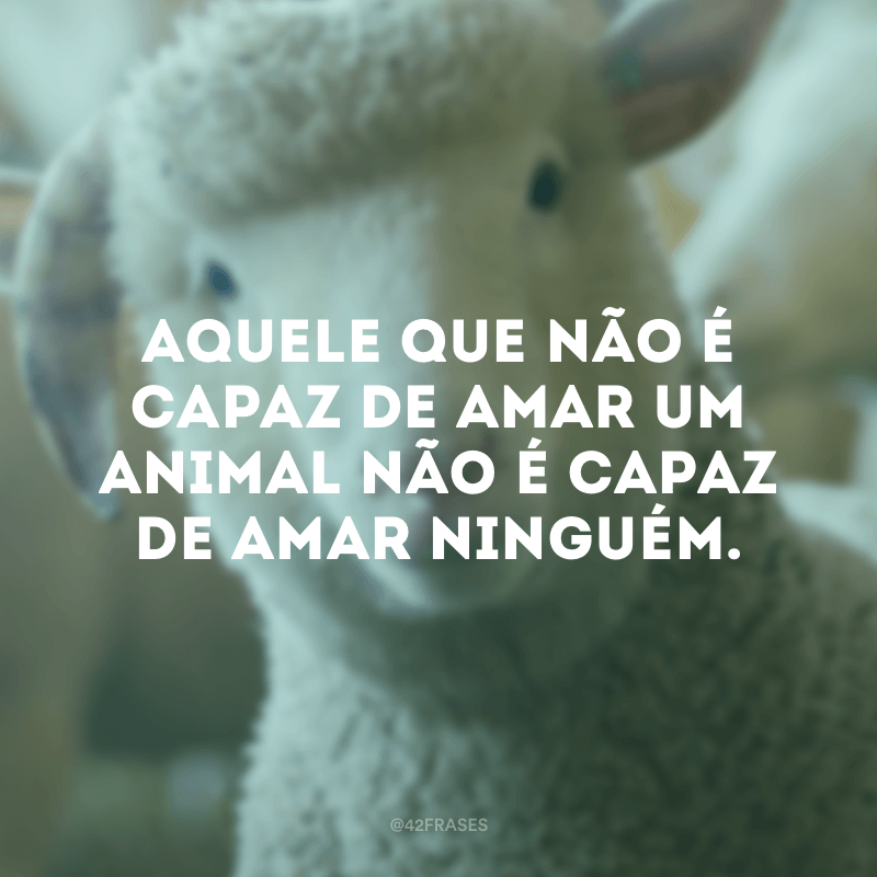 Aquele que não é capaz de amar um animal não é capaz de amar ninguém.