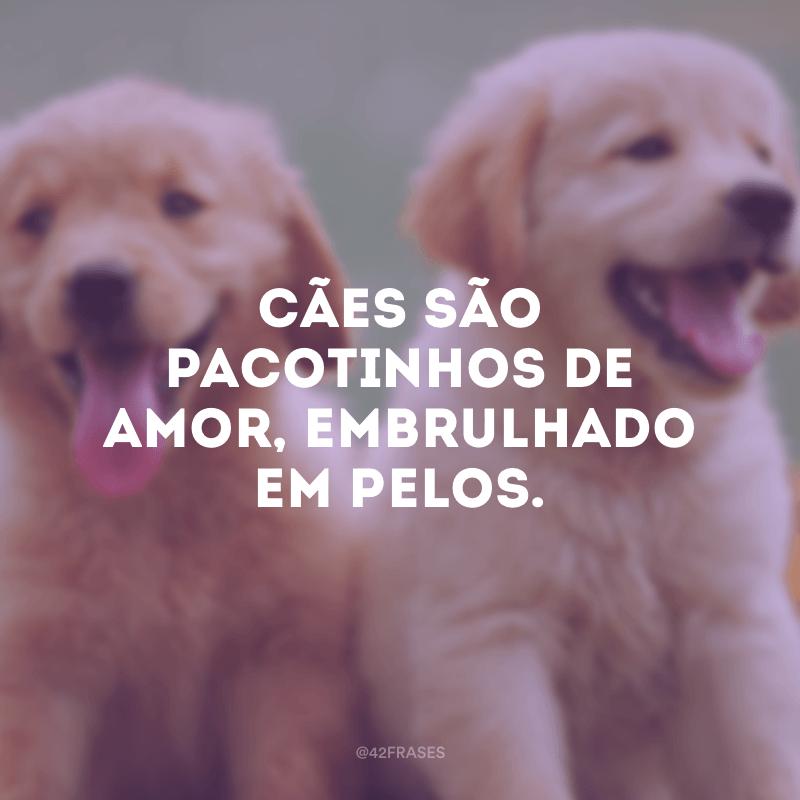 Cães são pacotinhos de amor, embrulhado em pelos.