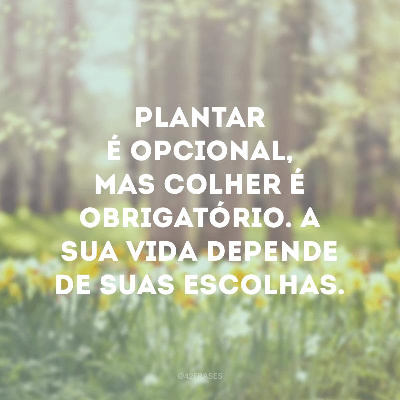 Plantar é opcional, mas colher é obrigatório. A sua vida depende de suas escolhas.
