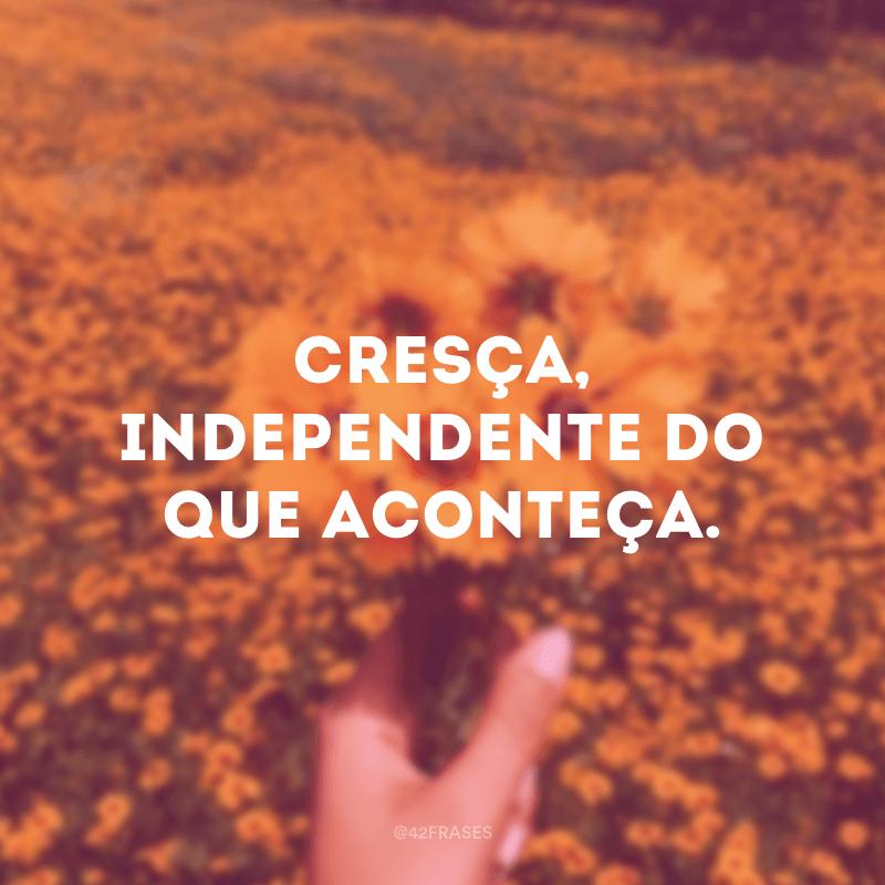 Cresça, independente do que aconteça.