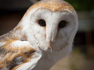 40 frases sobre animais que vão te fazer valorizar mais o nosso planeta