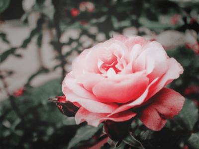 42 frases de saudades de quem morreu para homenagear quem partiu