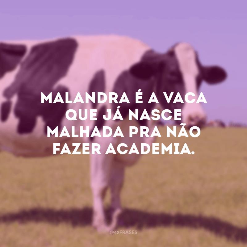 Malandra é a vaca que já nasce malhada pra não fazer academia.