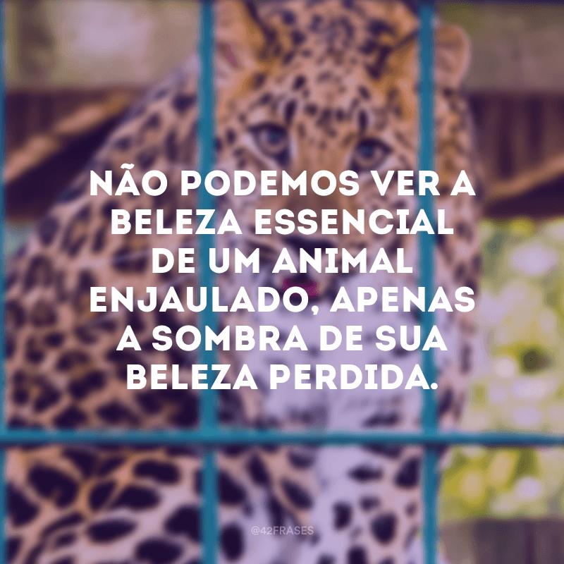 Não podemos ver a beleza essencial de um animal enjaulado, apenas a sombra de sua beleza perdida.