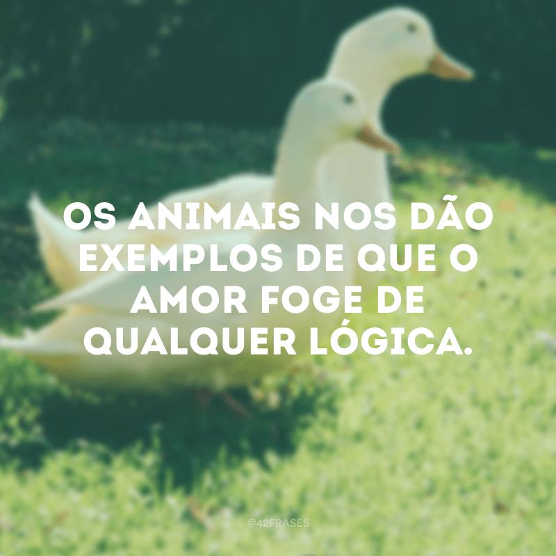 Os animais nos dão exemplos de que o amor foge de qualquer lógica.