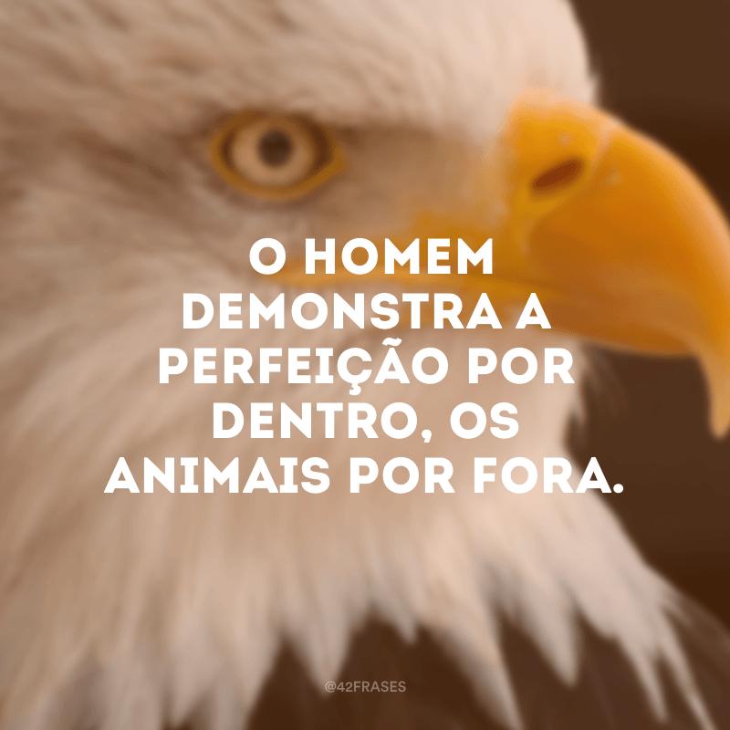 O homem demonstra a perfeição por dentro, os animais por fora.