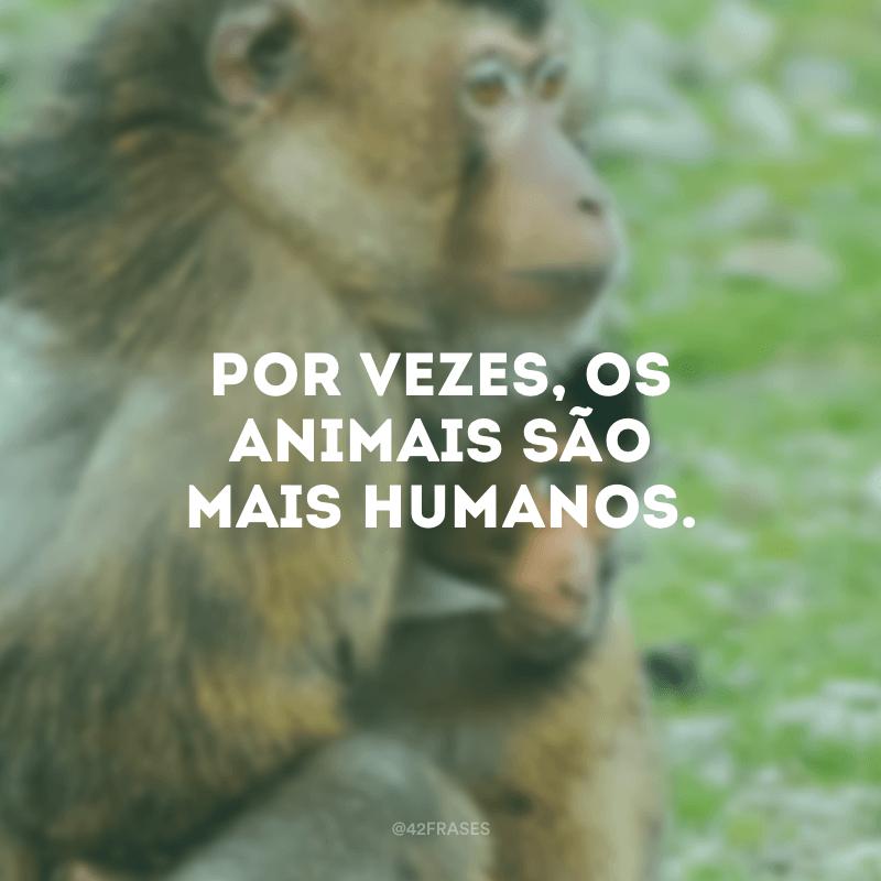 Por vezes, os animais são mais humanos.