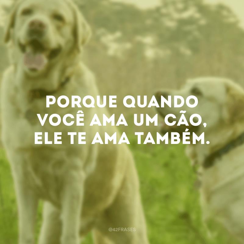 Porque quando você ama um cão, ele te ama também.