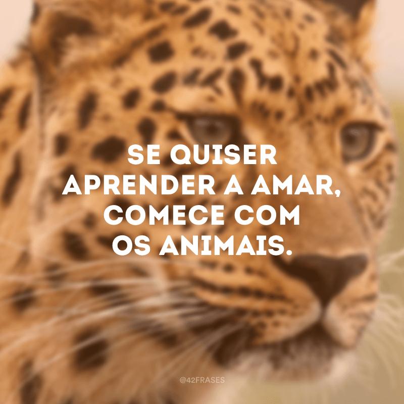 Se quiser aprender a amar, comece com os animais.