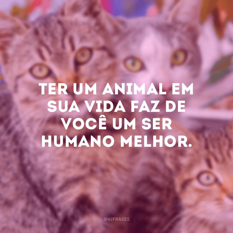 Ter um animal em sua vida faz de você um ser humano melhor.