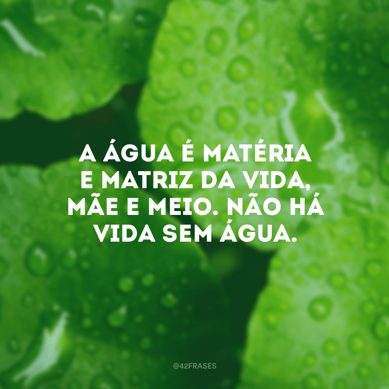 A água é matéria e matriz da vida, mãe e meio. Não há vida sem água.