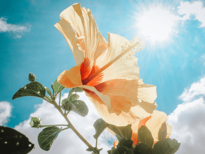 40 frases lindas sobre a vida que te farão valorizar mais cada dia