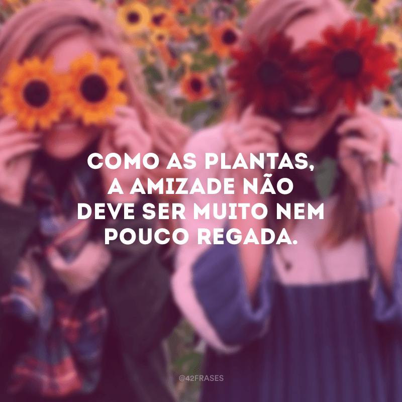 Como as plantas, a amizade não deve ser muito nem pouco regada.