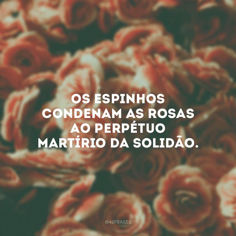 Os espinhos condenam as rosas ao perpétuo martírio da solidão.