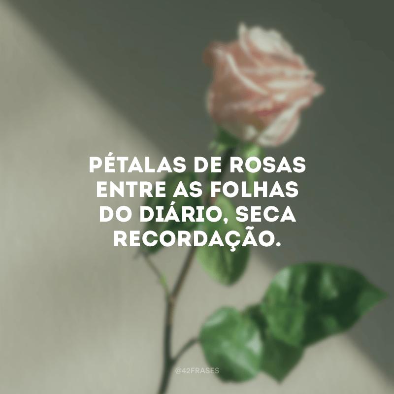 Pétalas de rosas entre as folhas do diário, seca recordação.