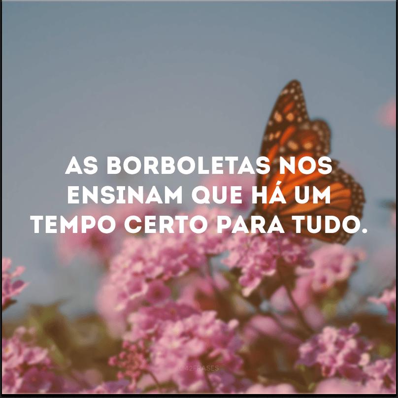 As borboletas nos ensinam que há um tempo certo para tudo.