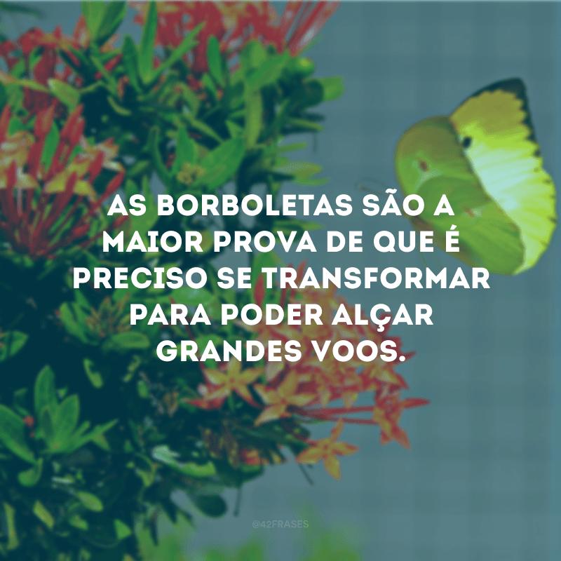 As borboletas são a maior prova de que é preciso se transformar para poder alçar grandes voos.