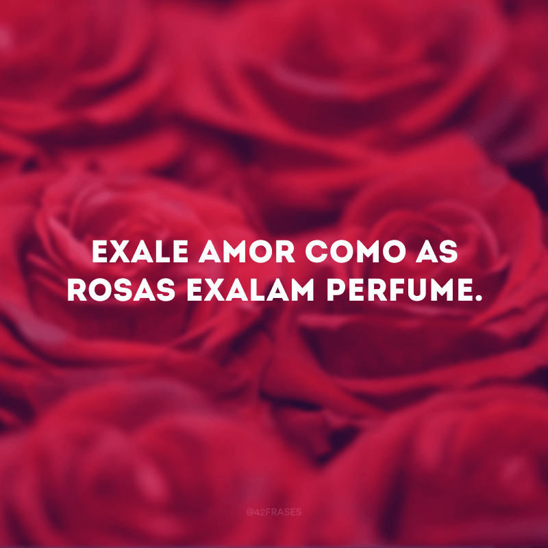 Exale amor como as rosas exalam perfume.