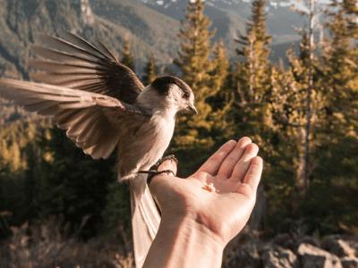 40 frases de paz na alma para viver com mais leveza