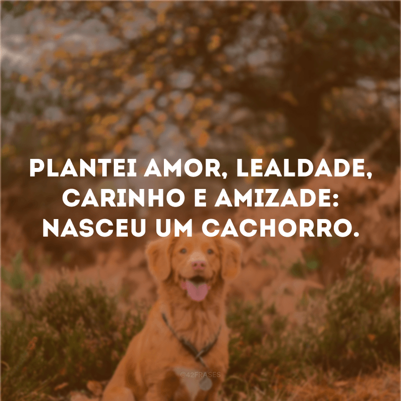 Plantei amor, lealdade, carinho e amizade: nasceu um cachorro.