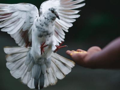 30 frases de Dia Mundial da Paz para fazer a diferença