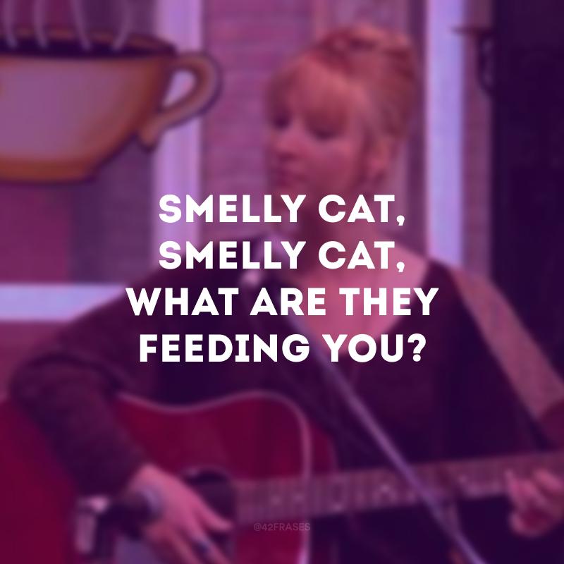 Smelly cat, smelly cat, what are they feeding you?  (Gato fedido, gato fedido, com o que eles estão te alimentando?)