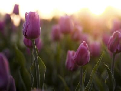50 frases de bom dia abençoado para declarar a sua fé