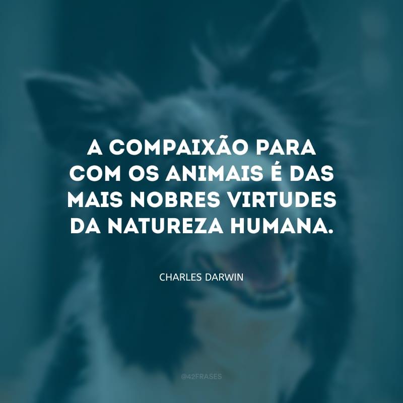 A compaixão para com os animais é das mais nobres virtudes da natureza humana.