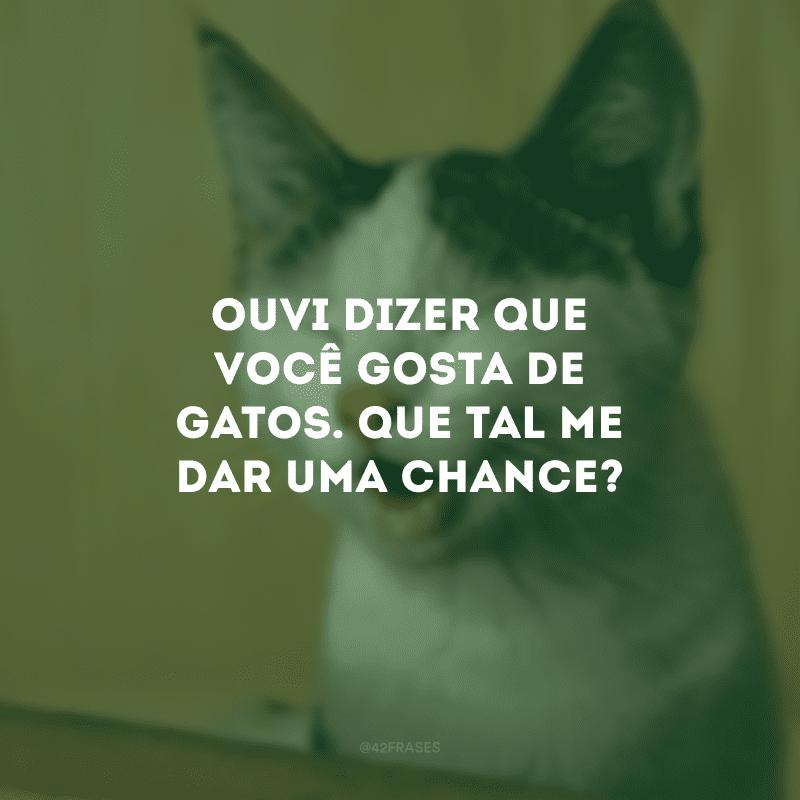 Ouvi dizer que você gosta de gatos. Que tal me dar uma chance?